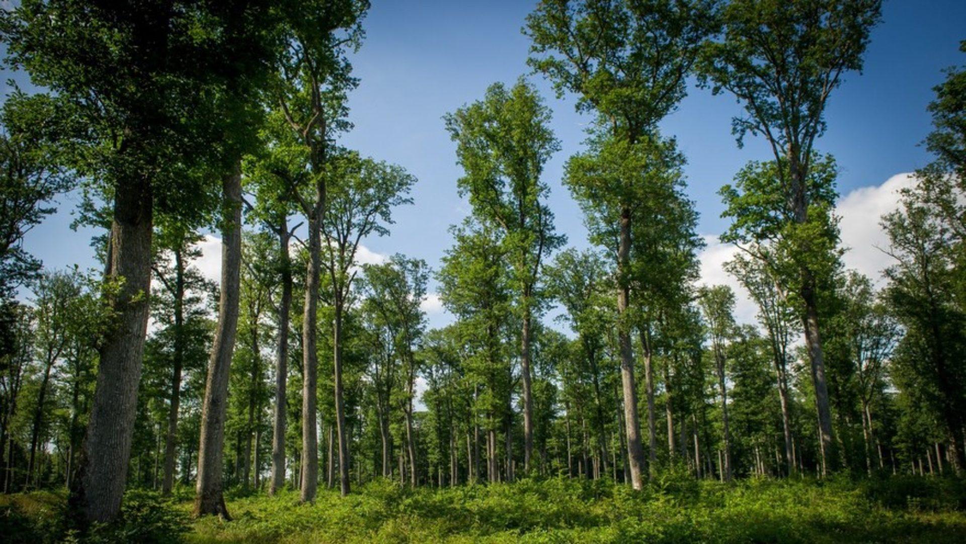 QUERCEO – Conseil en transition climat et biodiversité – Lyon